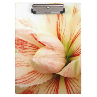 Pink and White Amaryllis Flower Clipboard