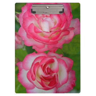 Pink and white roses clipboard