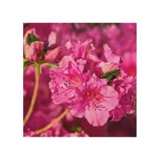 Pink Azaleas Wood Prints