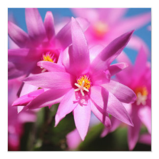 Pink Christmas Cactus Schlumbergera Flower Blossom 13 Cm X 13 Cm Square Invitation Card