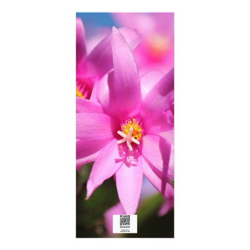Pink Christmas Cactus Schlumbergera Flower Blossom Personalized Announcement