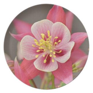 Pink Columbine flower plate