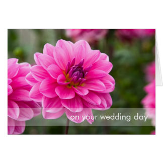 Pink Dahlia DSC4614 Greeting Card