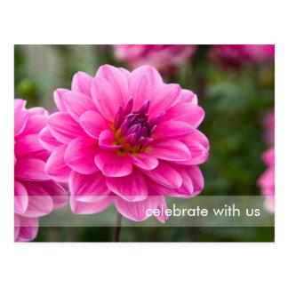 Pink Dahlia DSC4614 Postcard