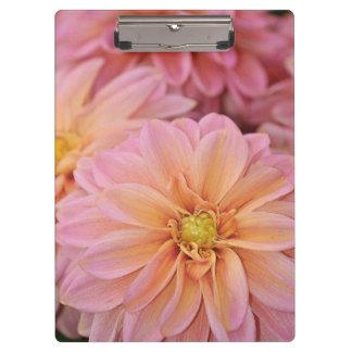 Pink dahlia flowers print clipboard