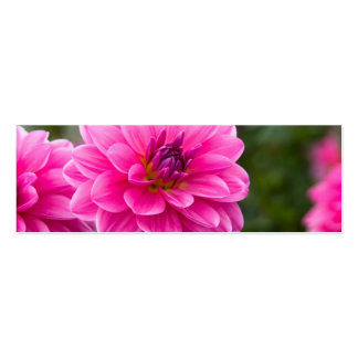 Pink Dahlia Pack Of Skinny Business Cards