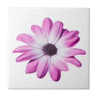 Pink daisy flower pretty kitchen tile, trivet