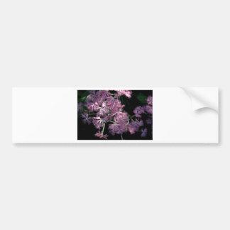 Pink Dianthus Tom Wurl Bumper Sticker
