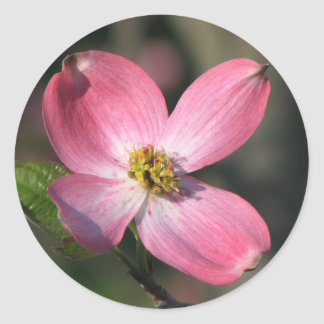 Pink Dogwood Bloom Classic Round Sticker