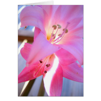 Pink February Greeting Card