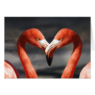 Pink Flamingo Love Greeting Card