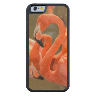 Pink Flamingos at Gatorland Carved Maple iPhone 6 Bumper Case