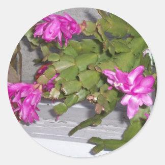 Pink Flower Cactus Round Sticker