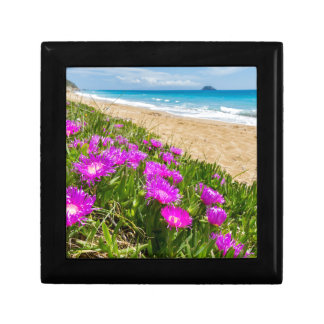 Pink icicle plants at coast in Greece Gift Box