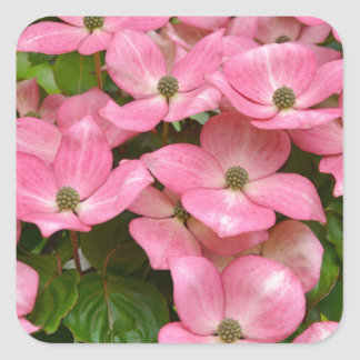 Pink kousa dogwood flowers print square sticker