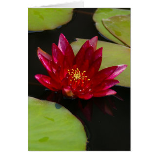 Pink Magenta Lotus Waterlily Card