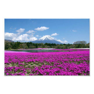 Pink moss and Mt. Fuji in the background Photo Art