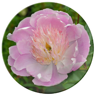 Pink peony flower plate