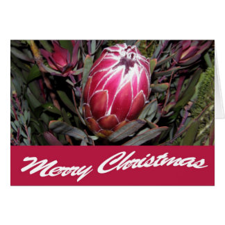 Pink Protea Flower Merry Christmas Card