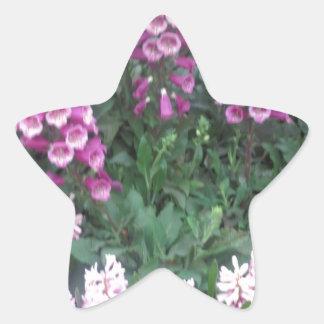 PINK Purple Flower Show: Love Sensual Romance Gift Star Sticker
