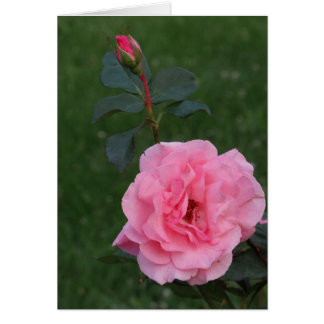 Pink Rose, Keeping In Touch Note Card
