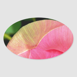 PInk Water Lily Lotus Oval Sticker