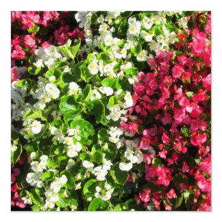 Pink White Begonias Card
