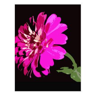 Pink Zinnia Floral Photography Design Postcard