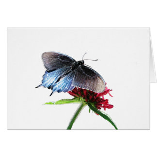 Pipevine Swallowtail Butterfly Cards