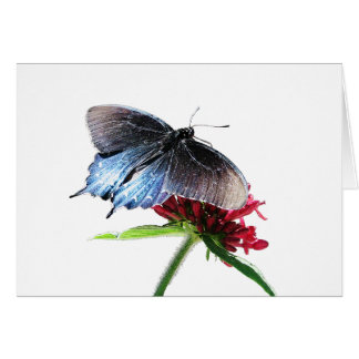 Pipevine Swallowtail Butterfly Note Card