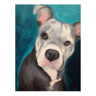 Pit Bull Post Cards