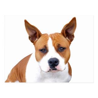 Pit Bull Puppy Dog Blank Postcard