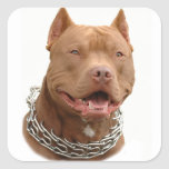 Pitbull dog square stickers