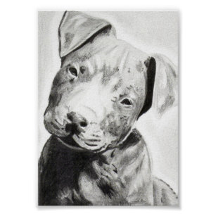 Pitbull puppy in pencil print by Jacob Grimm