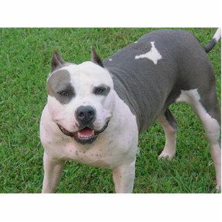 pitbull standing photo sculpture