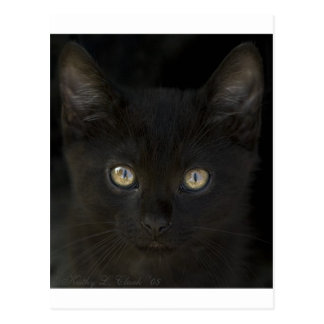 Pitch Black Feral Kitten With Shiny Loving Eyes Postcard