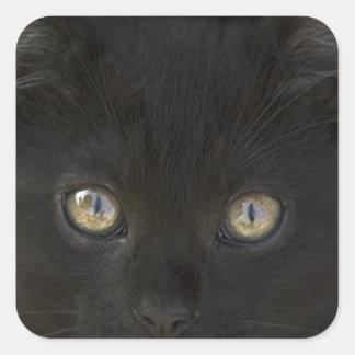 Pitch Black Feral Kitten With Shiny Loving Eyes Square Sticker