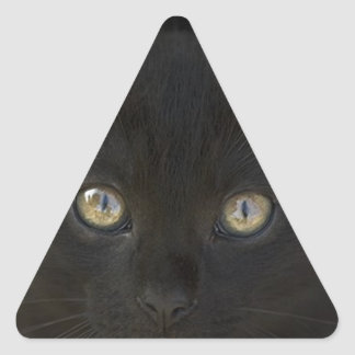 Pitch Black Feral Kitten With Shiny Loving Eyes Triangle Sticker