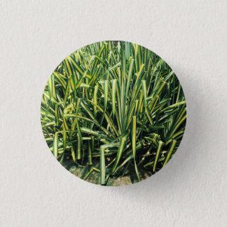 Plant Button Green Screw Pine