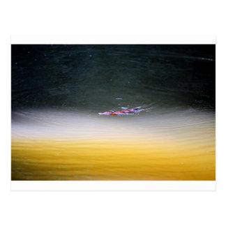 PLATYPUS IN WATER EUNGELLA AUSTRALIA POSTCARD