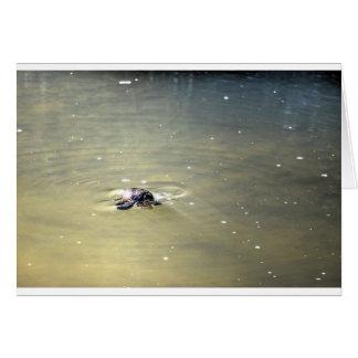 PLATYPUS IN WATER EUNGELLA AUTRALIA CARD