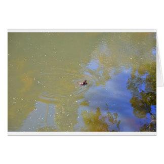 PLATYPUS IN WATER EUNGELLA NATIONAL PARK AUSTRALIA CARD