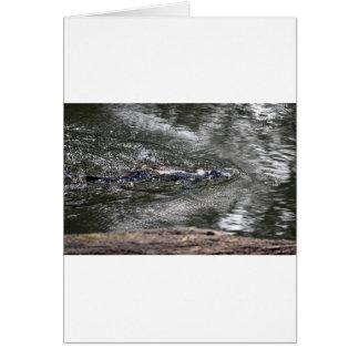 PLATYPUS IN WATER EUNGELLA QUEENSLAND AUSTRALIA CARD