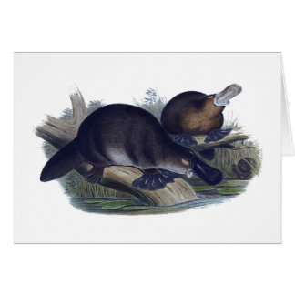 Platypus on a Log Illustration Card