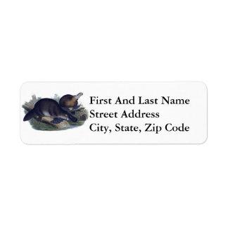 Platypus on a Log Illustration Return Address Label
