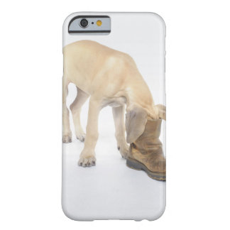 playing,friendly,curiosity barely there iPhone 6 case