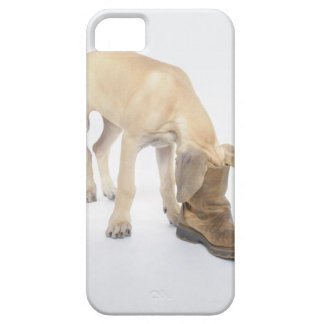 playing,friendly,curiosity iPhone 5 cover