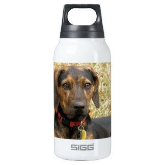 Plott Hound Insulated Water Bottle