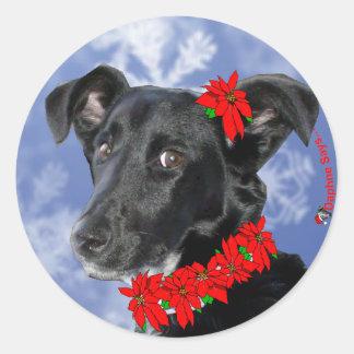 Poinsettia Daphne Classic Round Sticker