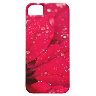 Poinsettia iPhone 5 Cover